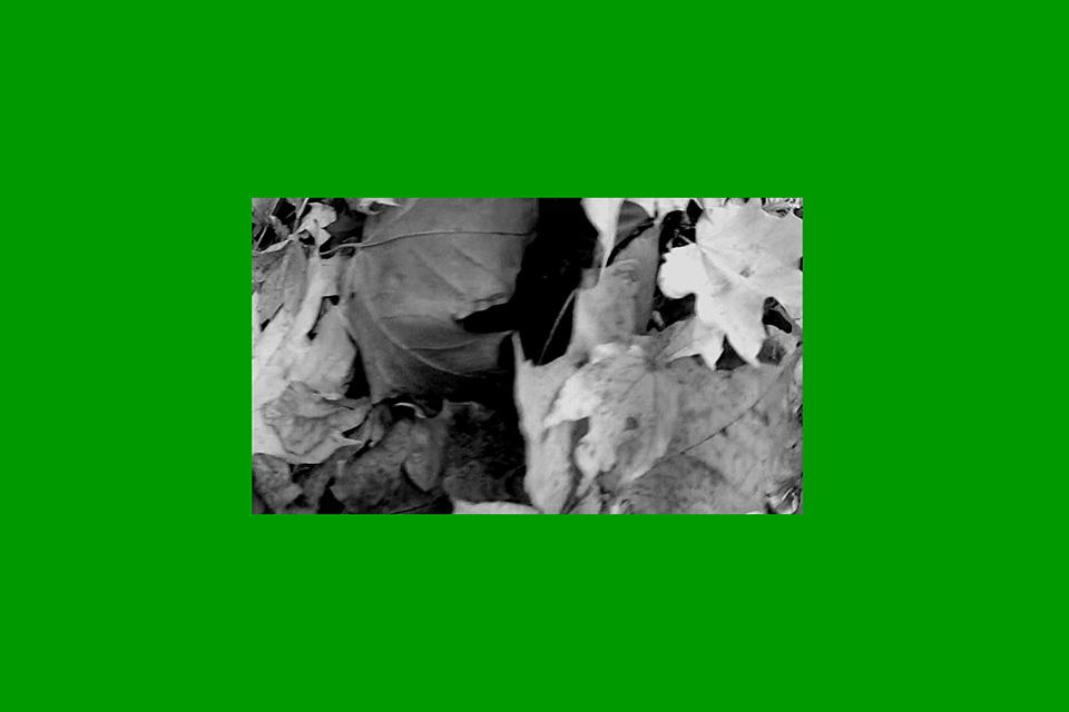 botticellian trees, videostill
