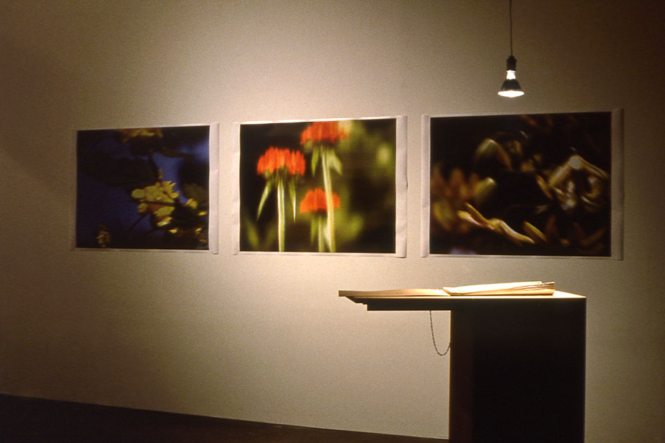 memories of nature, CAM, installation set-up