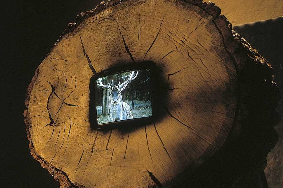 singing deer, video object